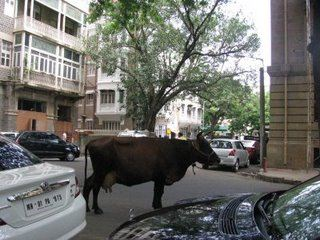 Cow in street, Mumbai, India