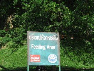 Feeding Area Thailand