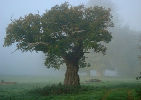 Oxfordshire tree