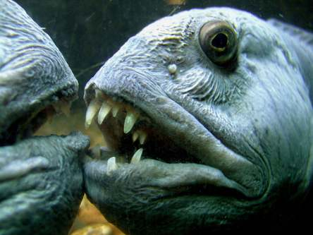 6 Most Unusual Sea Creatures in the World | Travel Blog