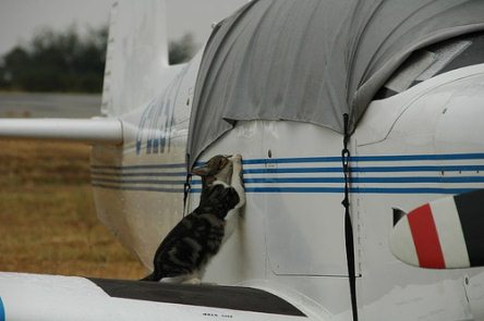 Post image for The 20 Step Guide to Traveling With Your Pet