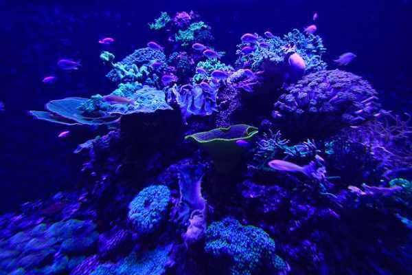 Bioluminescence 9 incredible glowing sea creatures travel blog tripbase - Bioluminescent aquarium ...