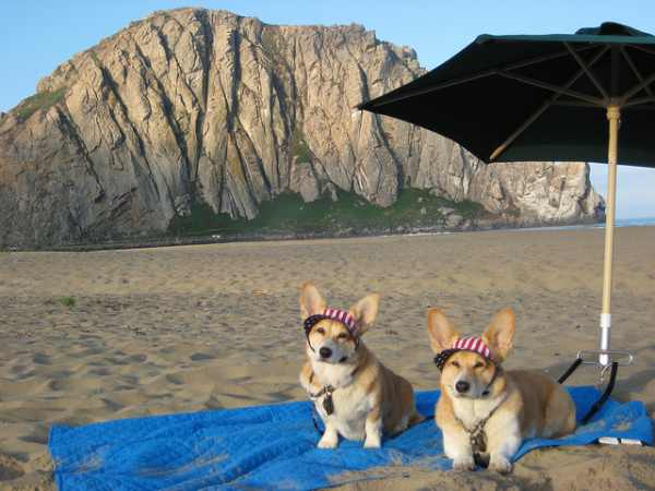 photo essay  dogs on vacation